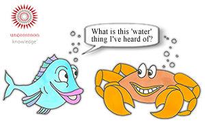 Fish asking a crab
